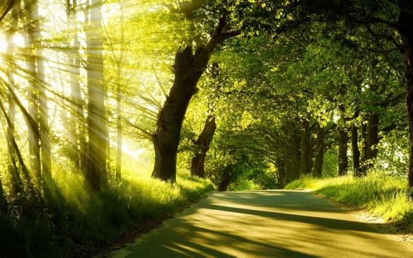 summer-forest-sunshine-1440x900